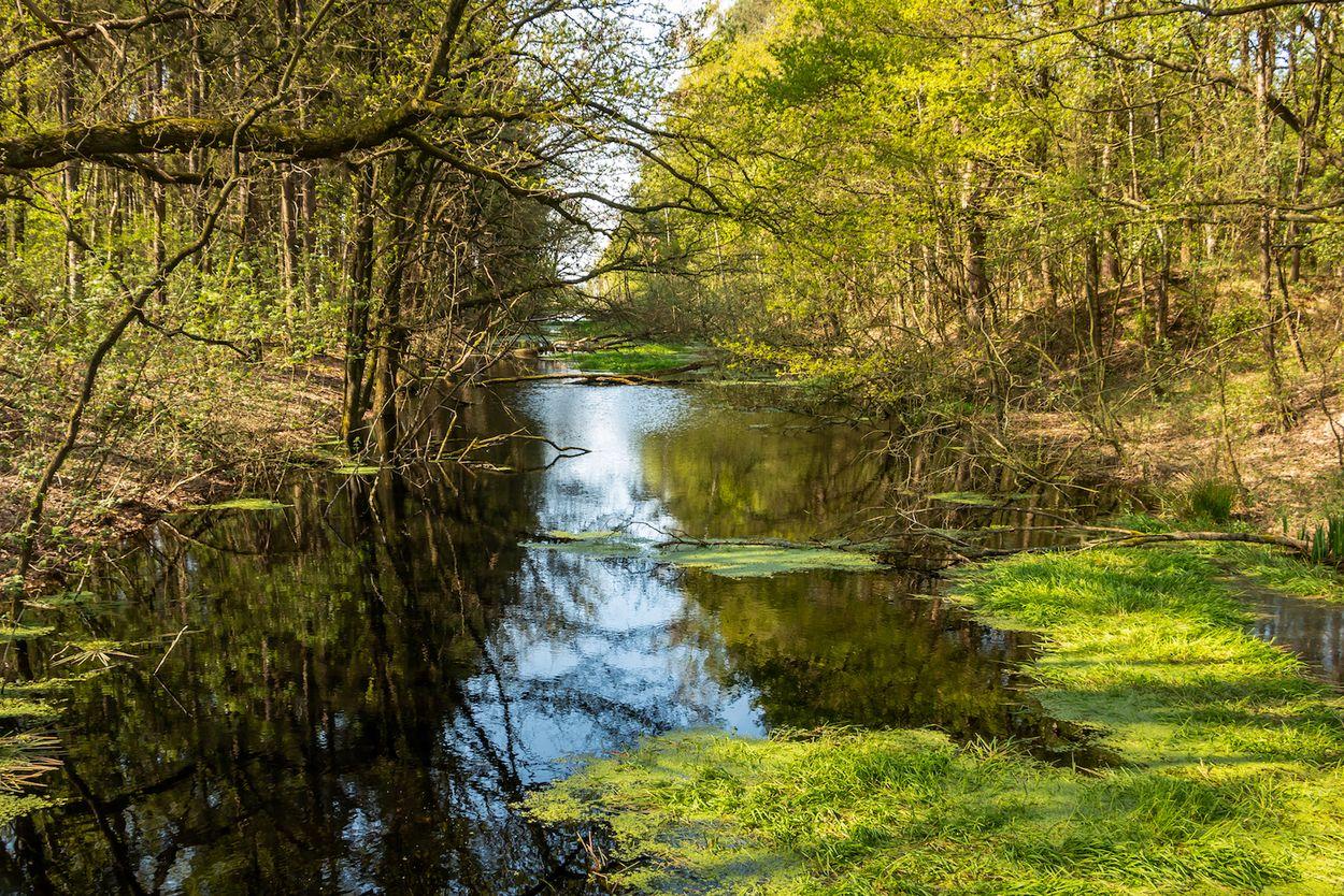 Fochteloerveen Door Hulshof pictures