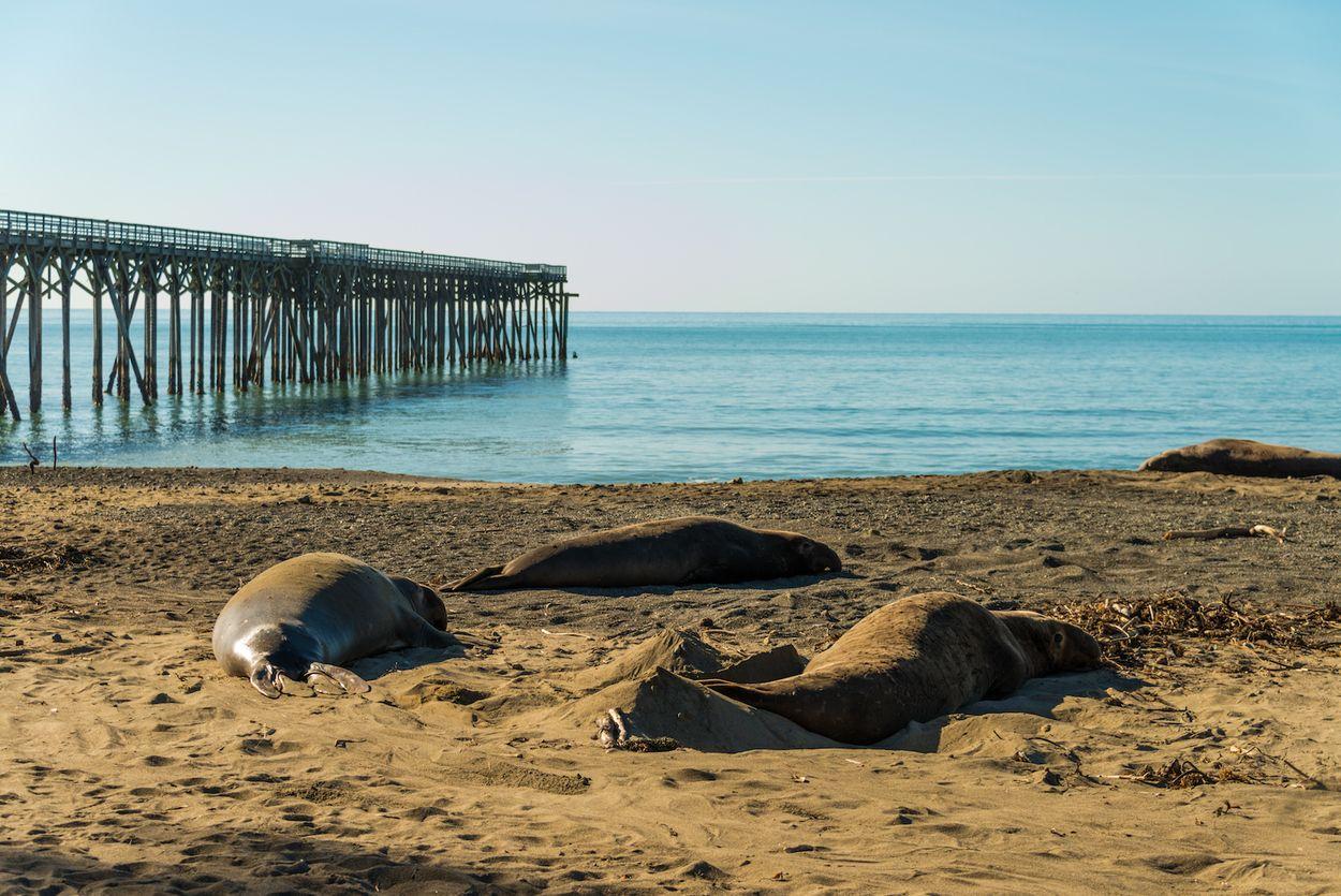 zeeolifanten strand