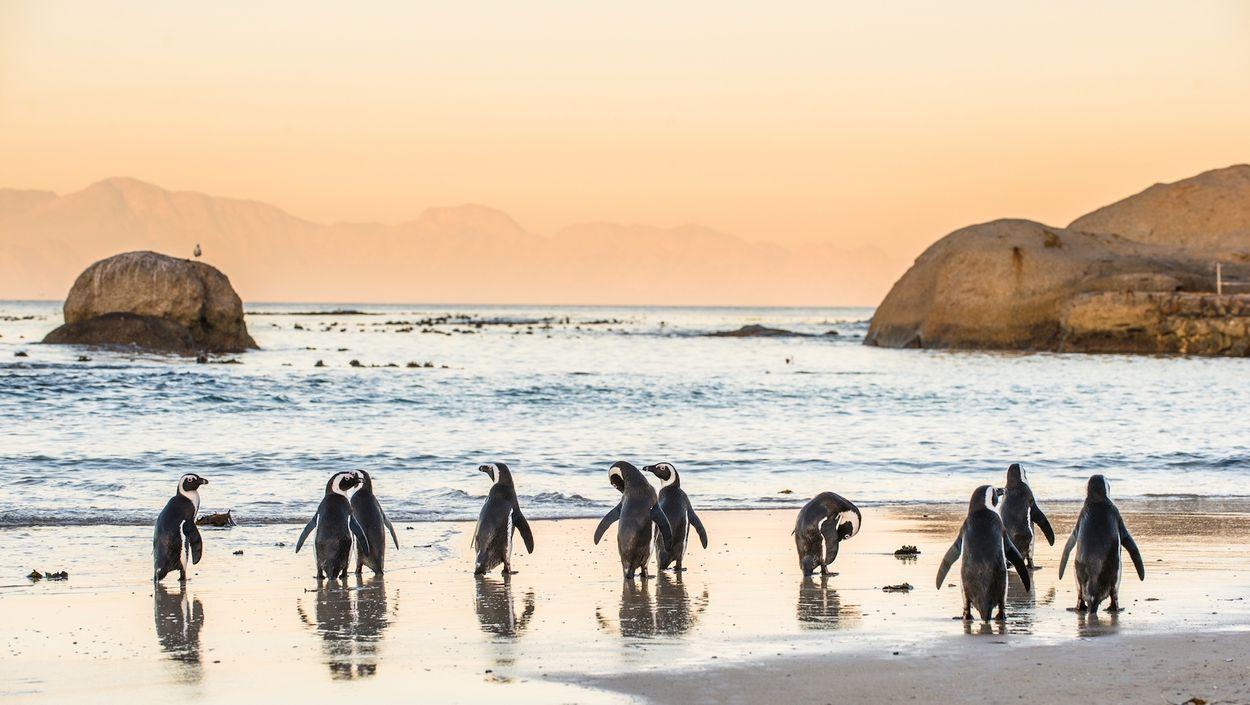 pinguins zonsondergang
