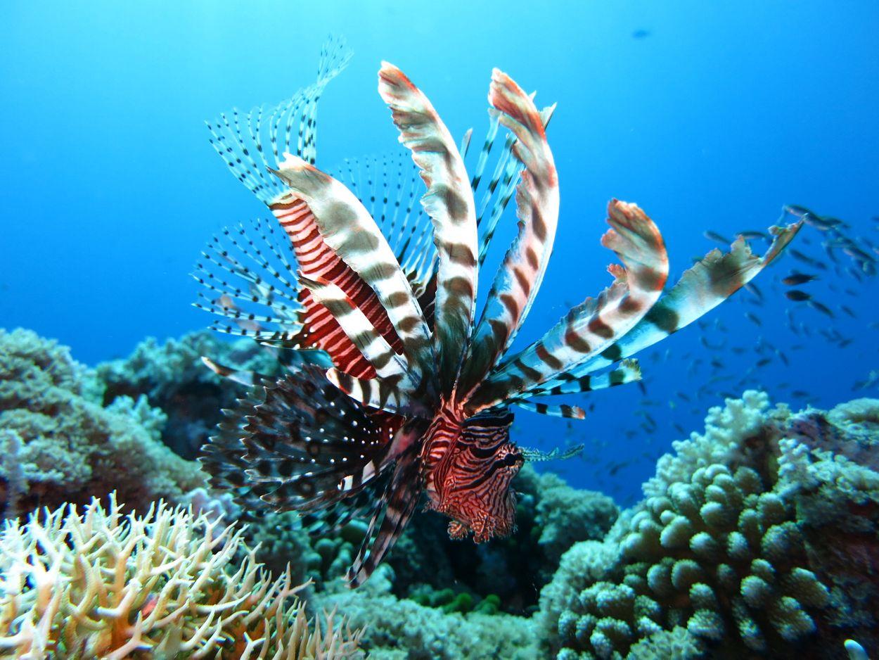 sea-water-nature-ocean-sport-travel-612784-pxhere.com
