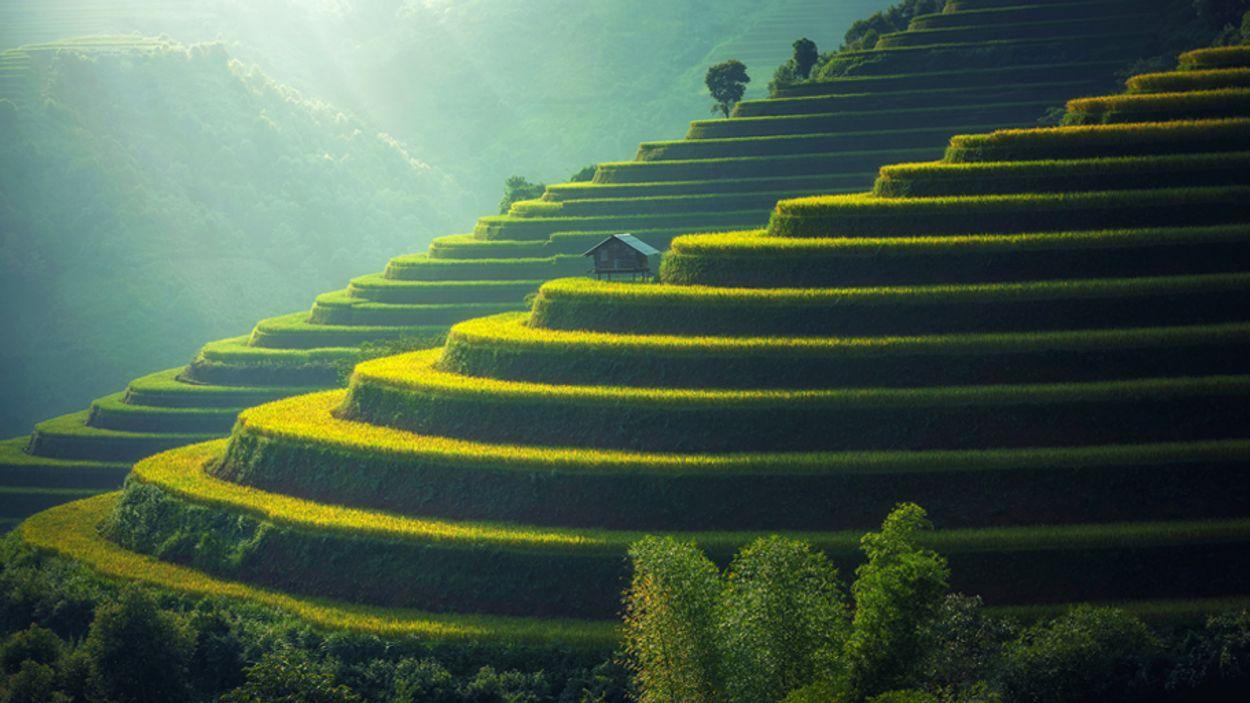 rijstvelden maleisie