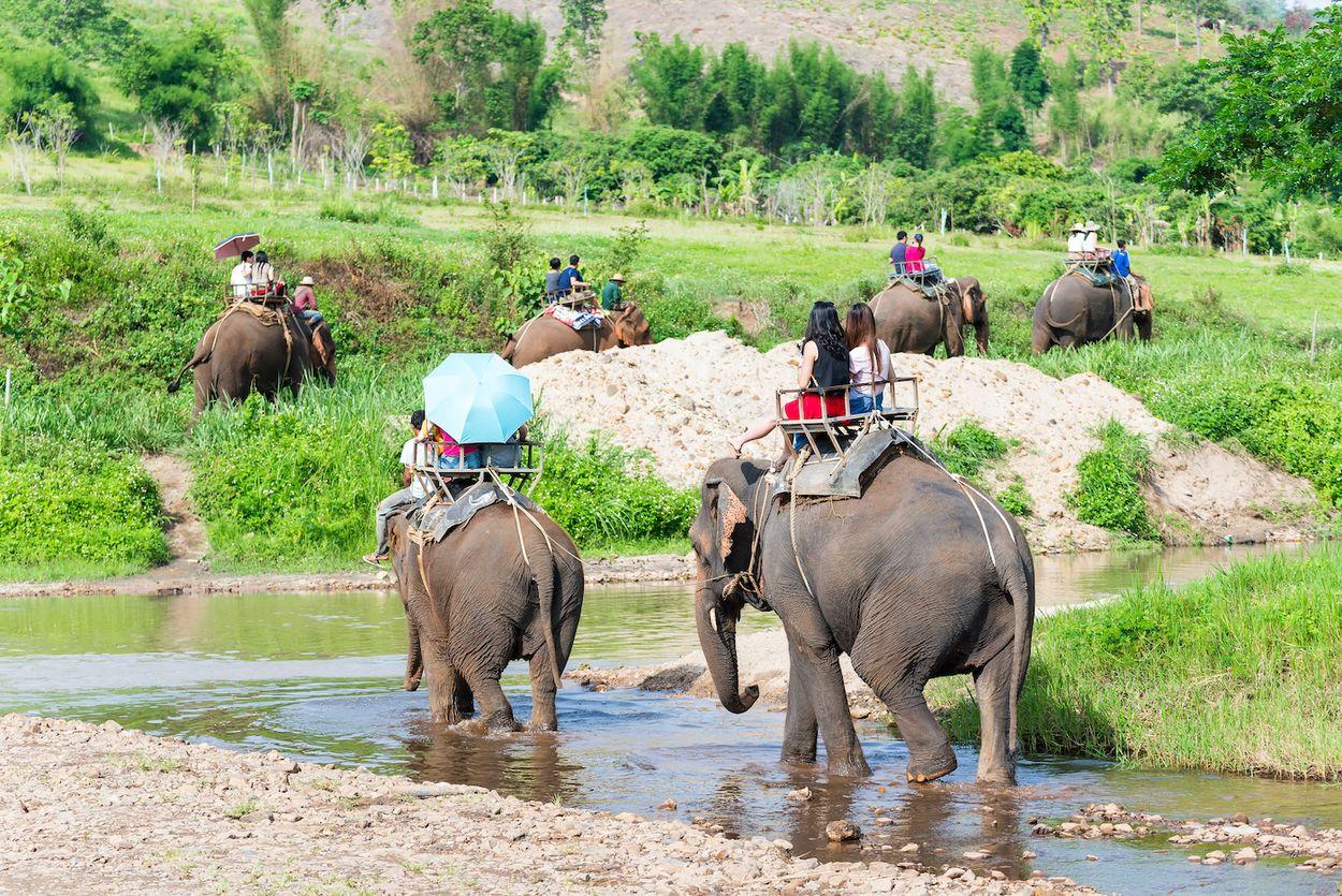 olifanten2