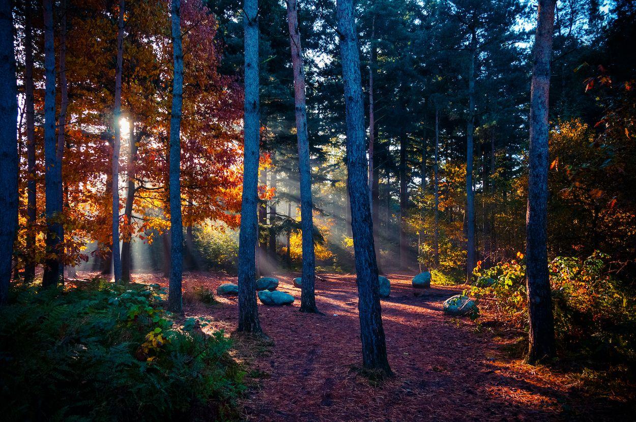 Afbeelding van Verken een van de oudste bossen van Nederland