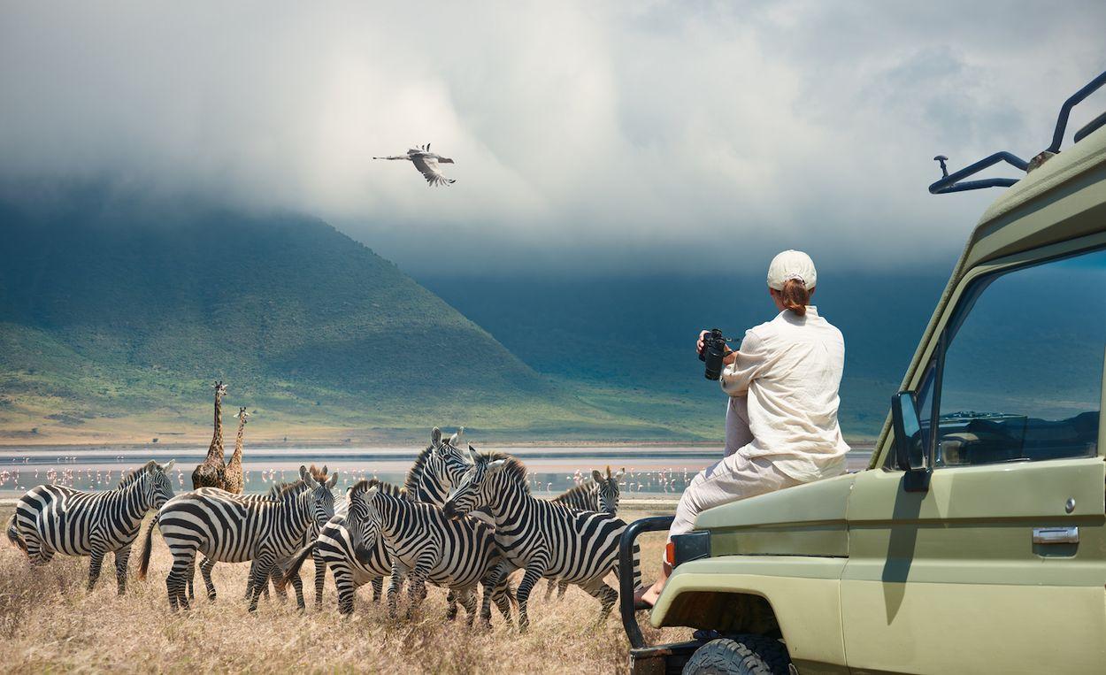 Afbeelding van Wildlife spotten op reis? Zo doe je dat met een gerust hart