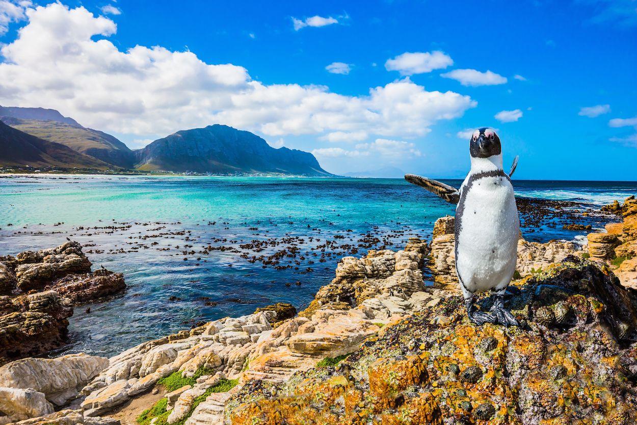 Pinguin stilling
