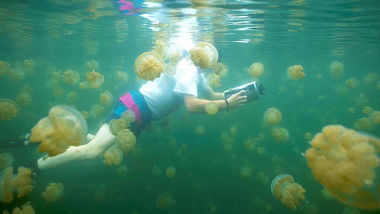 xlthumb_jellyfishlake
