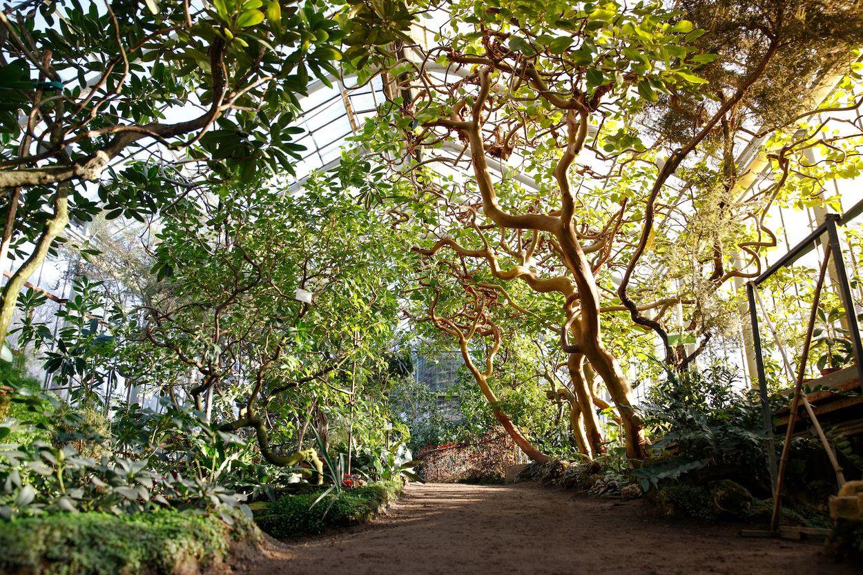 Afbeelding van Nederlandse tropen: de groenste botanische tuinen en kassen