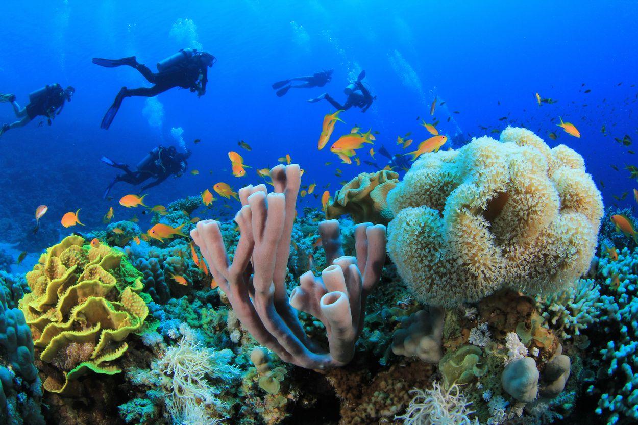 Koraal rode zee egypte 2