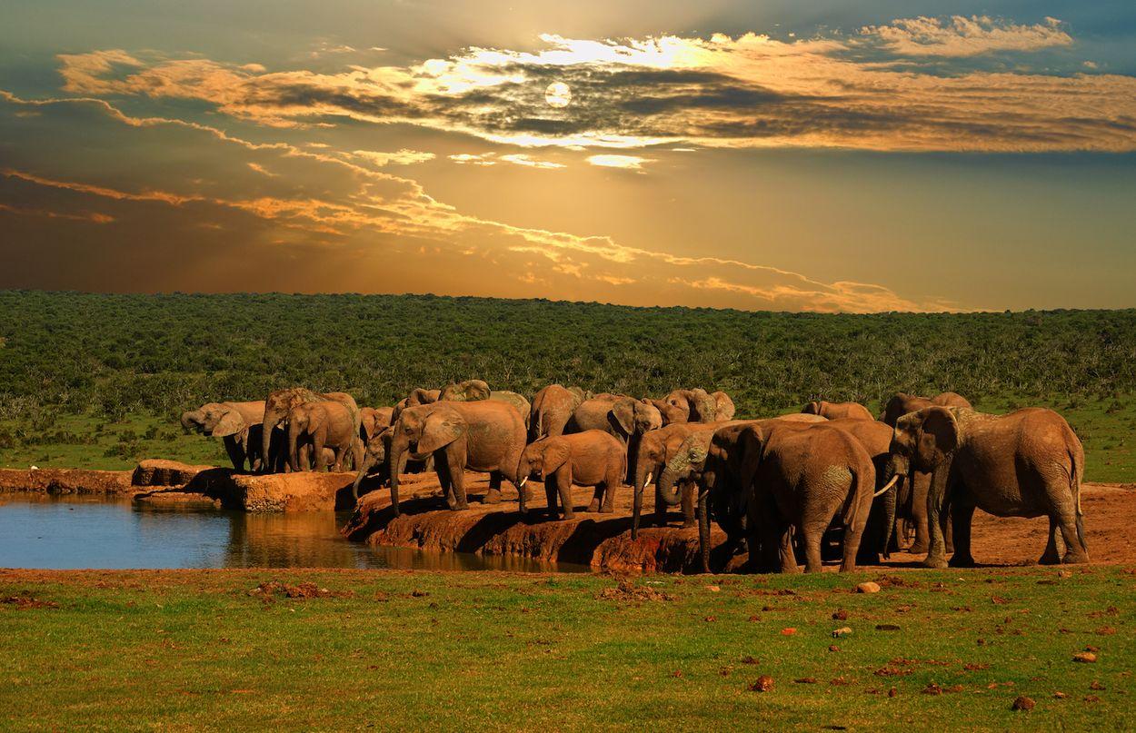 Olifanten zuid Afrika