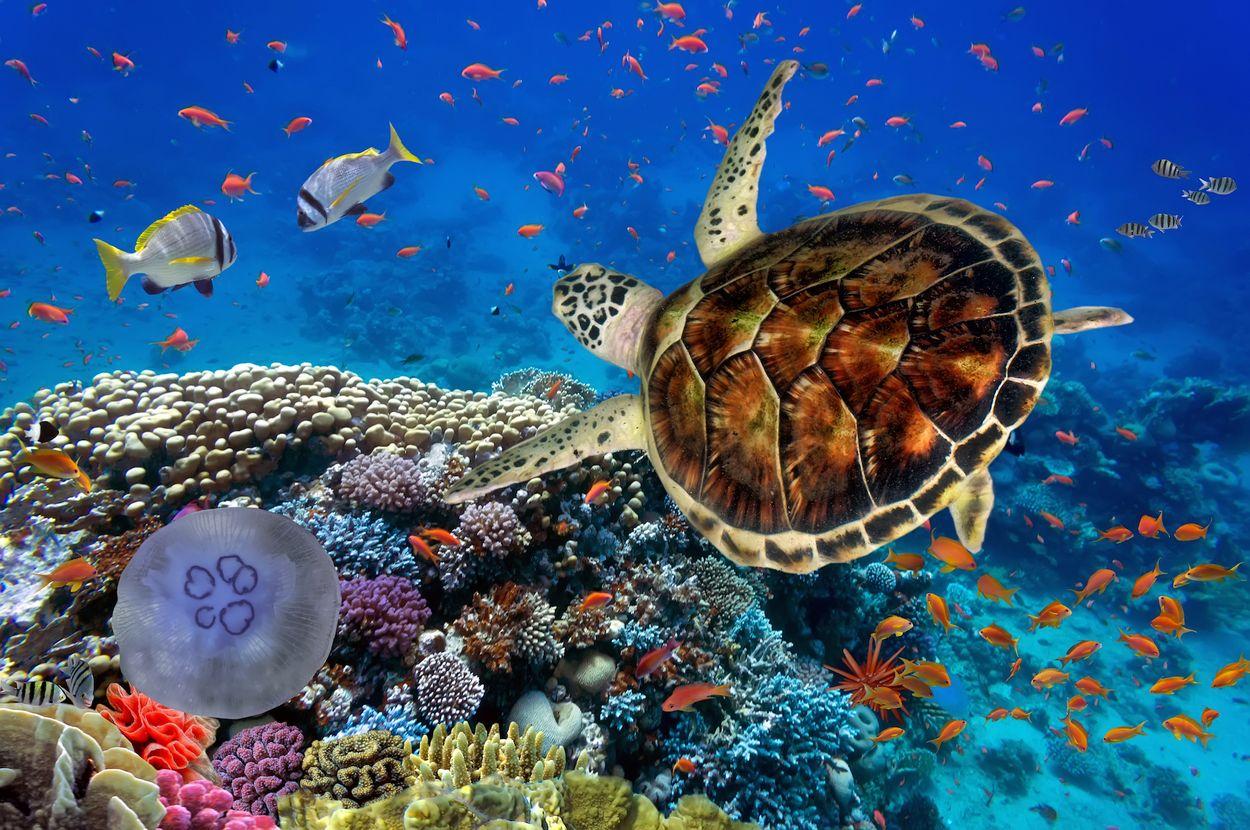Koraal rode zee egypte 3