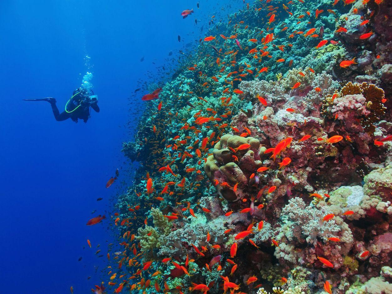 Koraal rode zee egypte 4