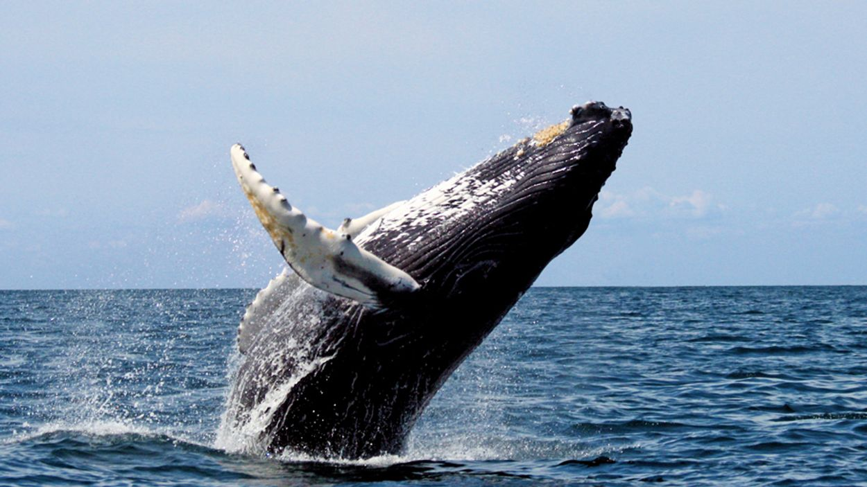xlthumb_whalewatching
