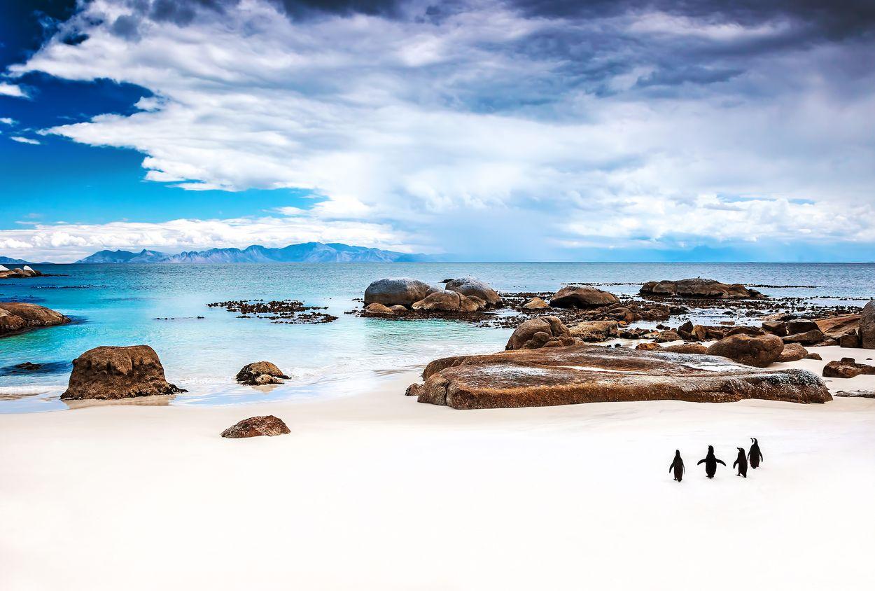 Zee en pinguïns