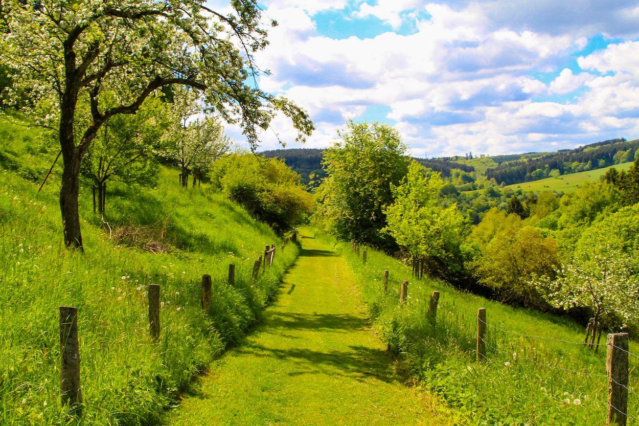 Eifel duitsland groen