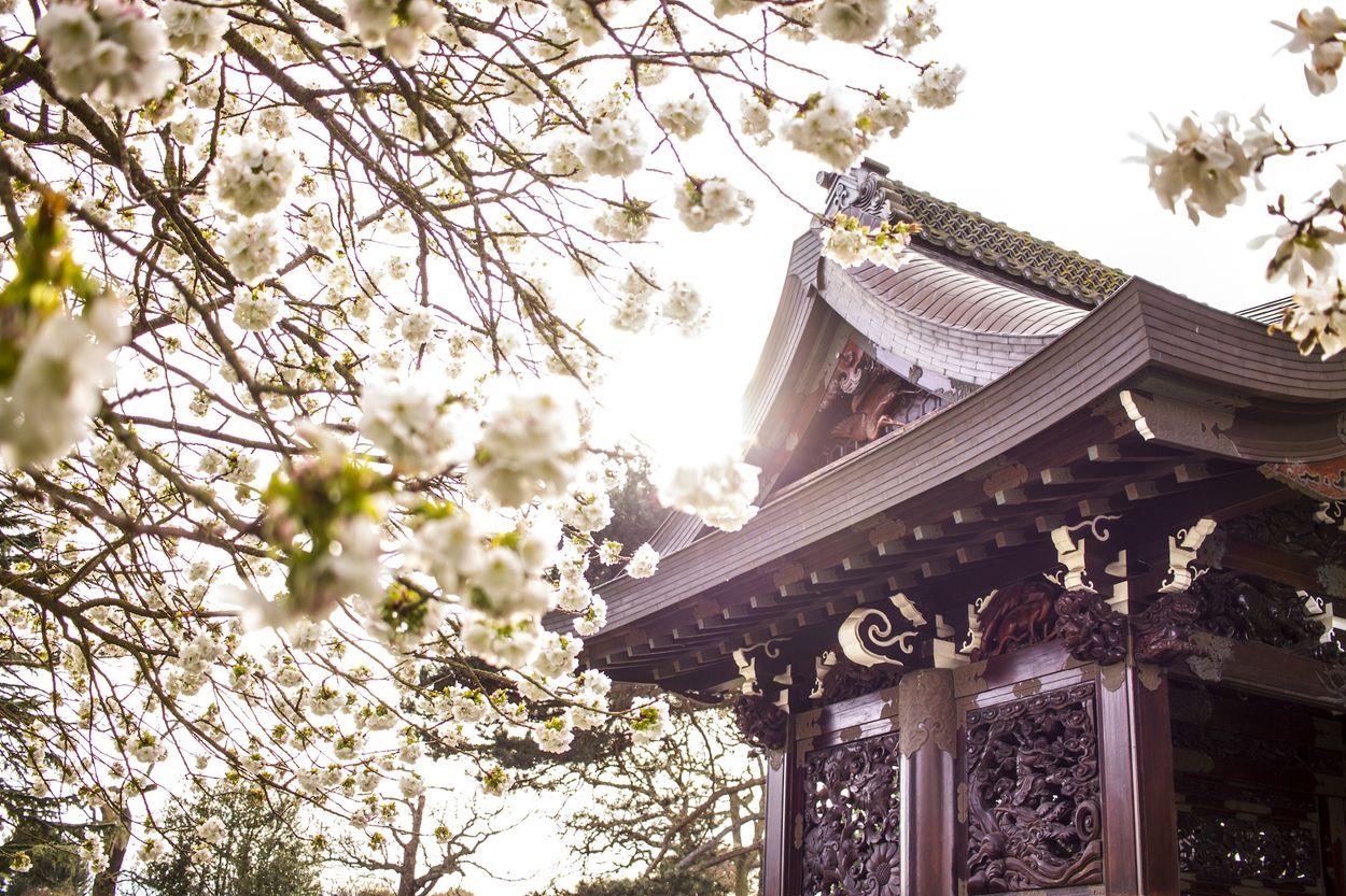Kew Gardens London Londen blossom sakura