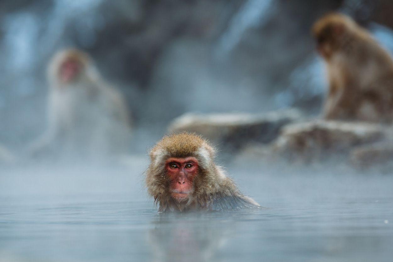 Nagano Japan aapjes