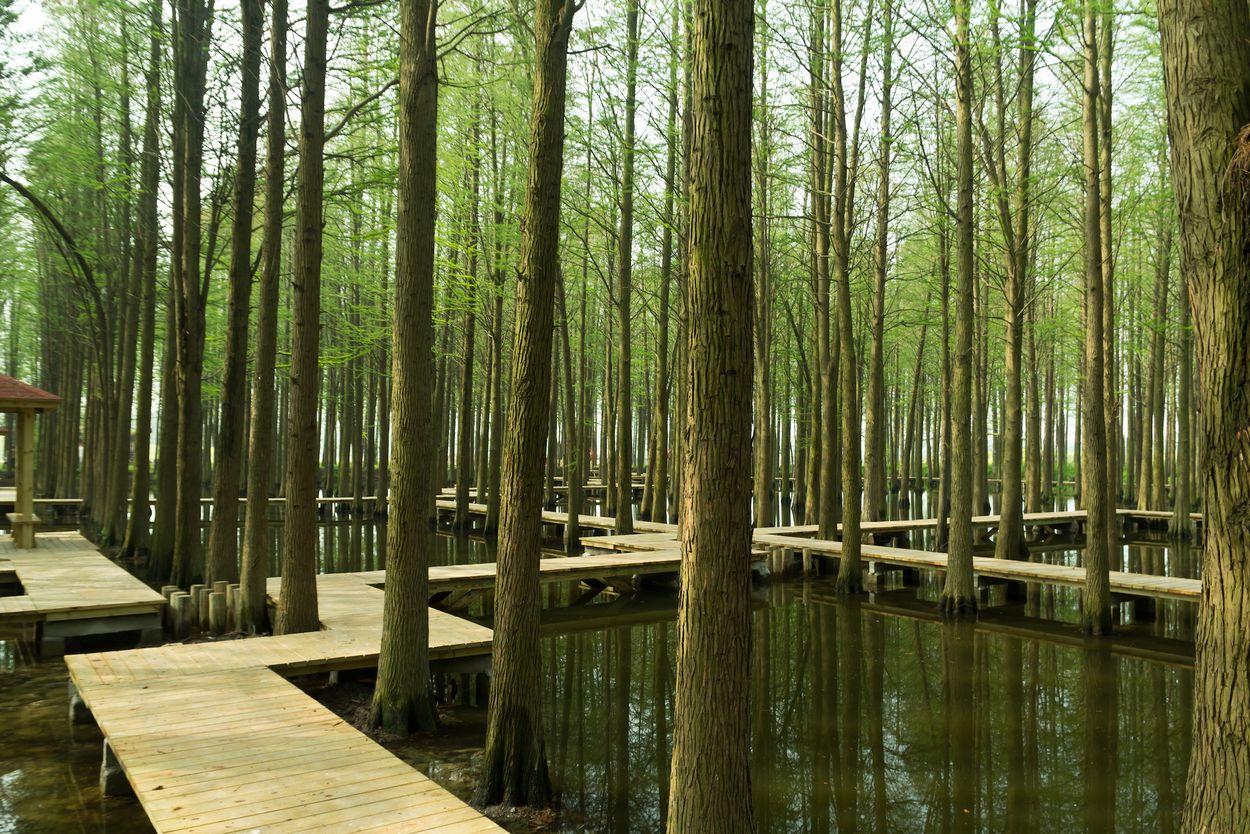 Lizhong water forest park Door HelloRF Zcool