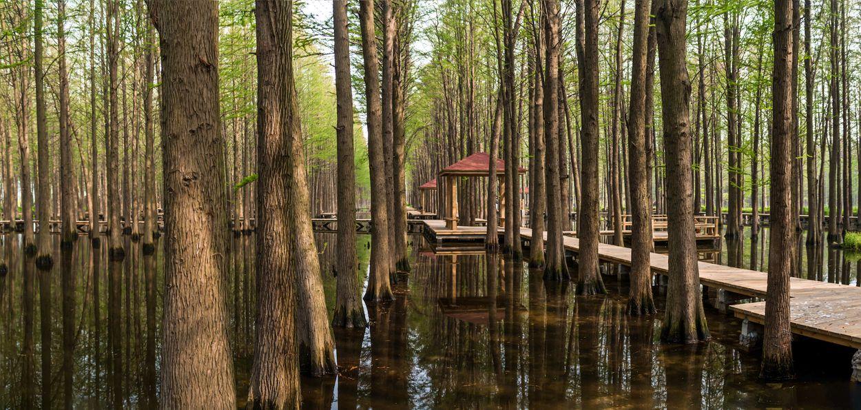 Lizhong water forest park Door HelloRF Zcool2