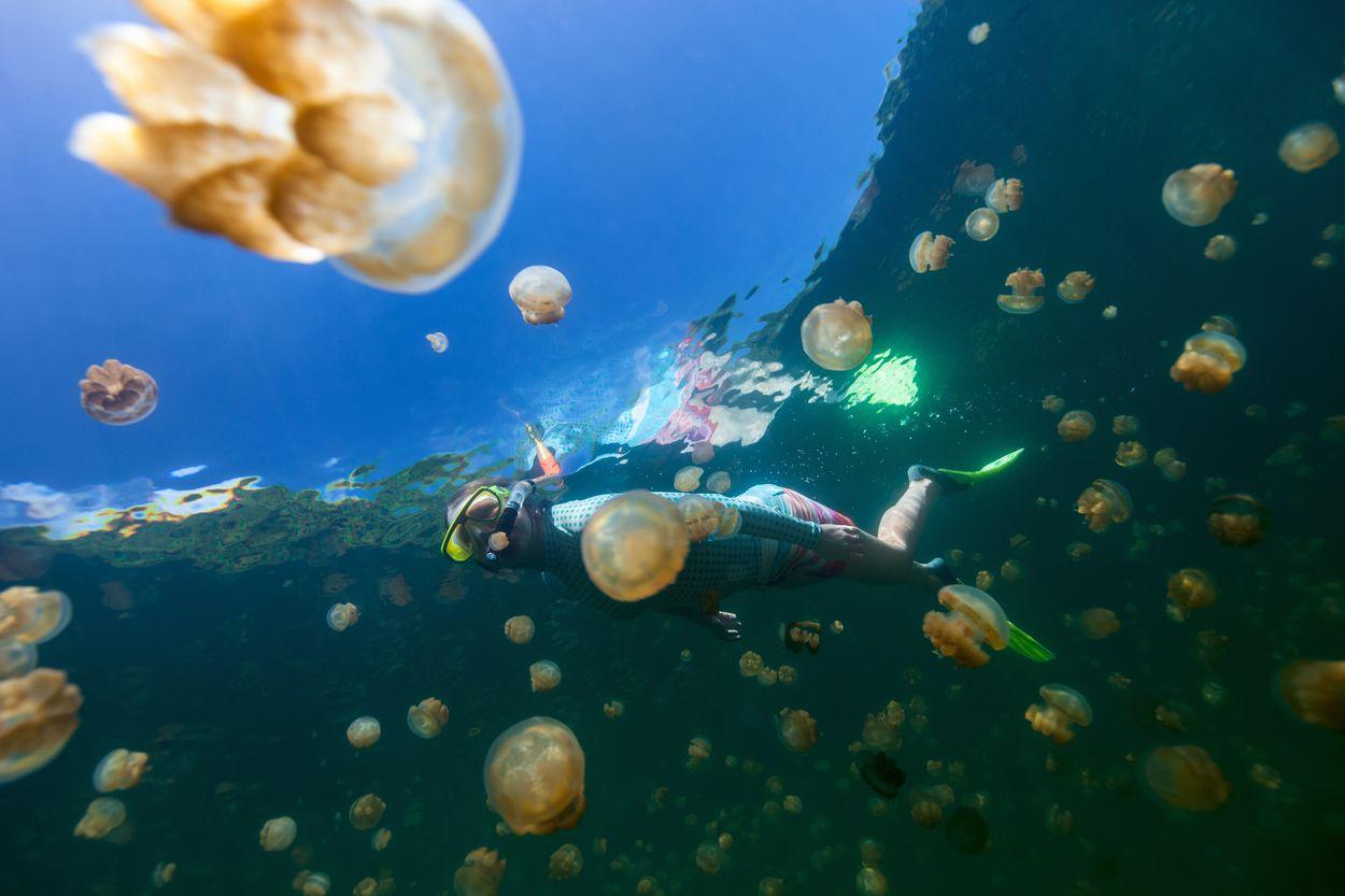 Jellyfish lake Palau4