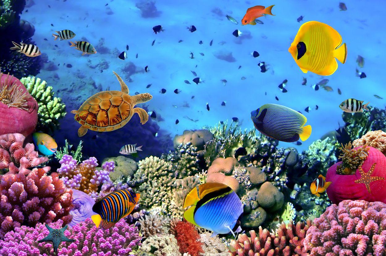 Koraal rode zee egypte