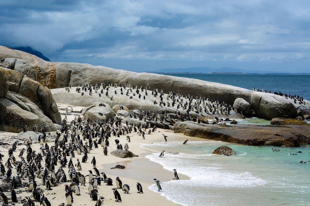 pinguïns beach