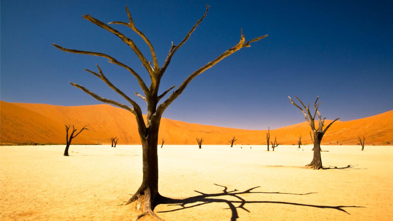 Afbeelding van Dit zijn de mooiste plekken van Namibië
