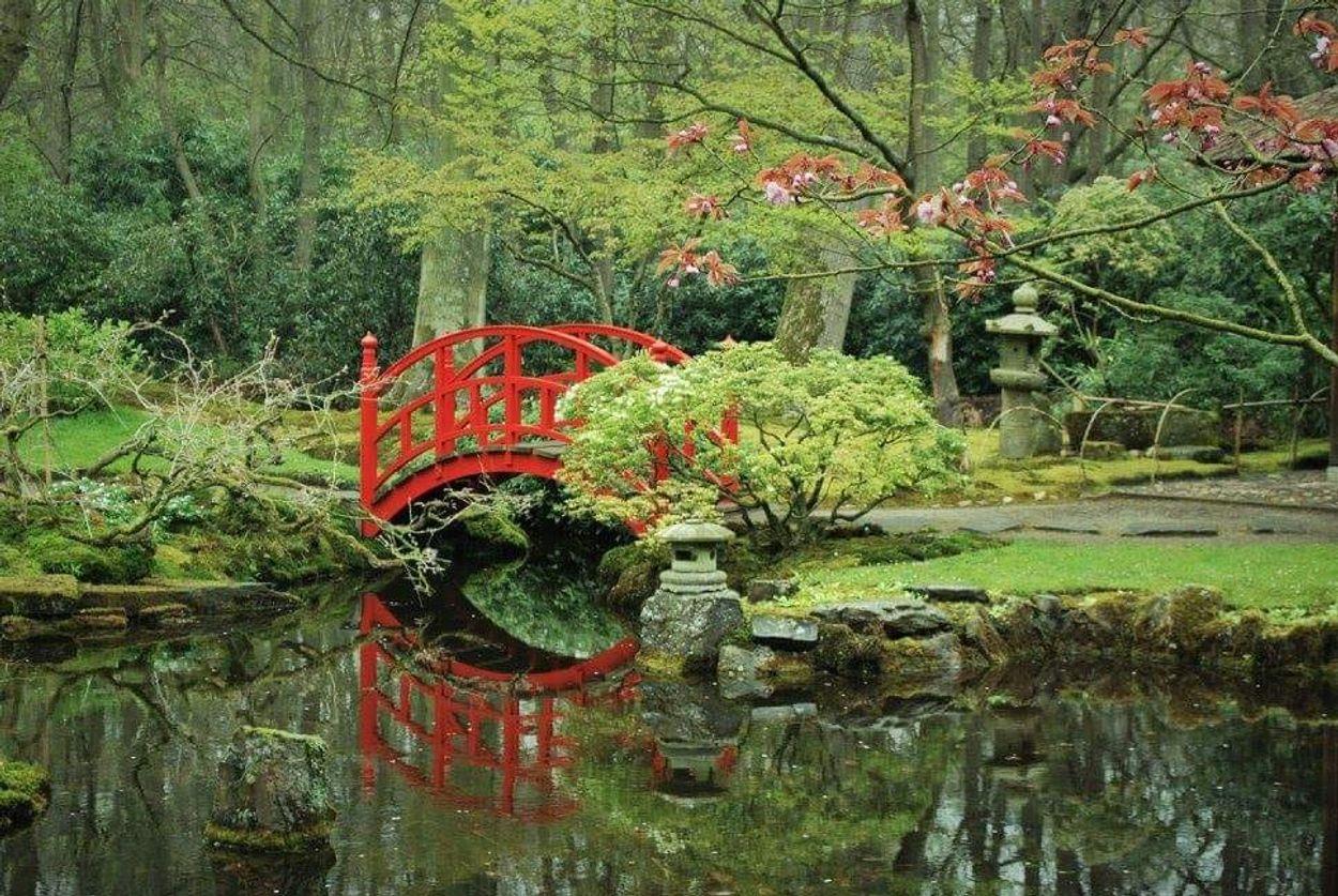 Eva Nuwenhoud - Japanse tuin Den Haag