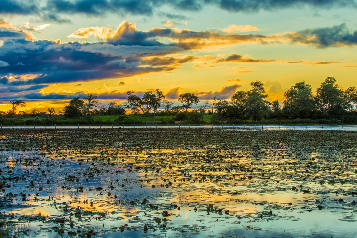 Pantanal river