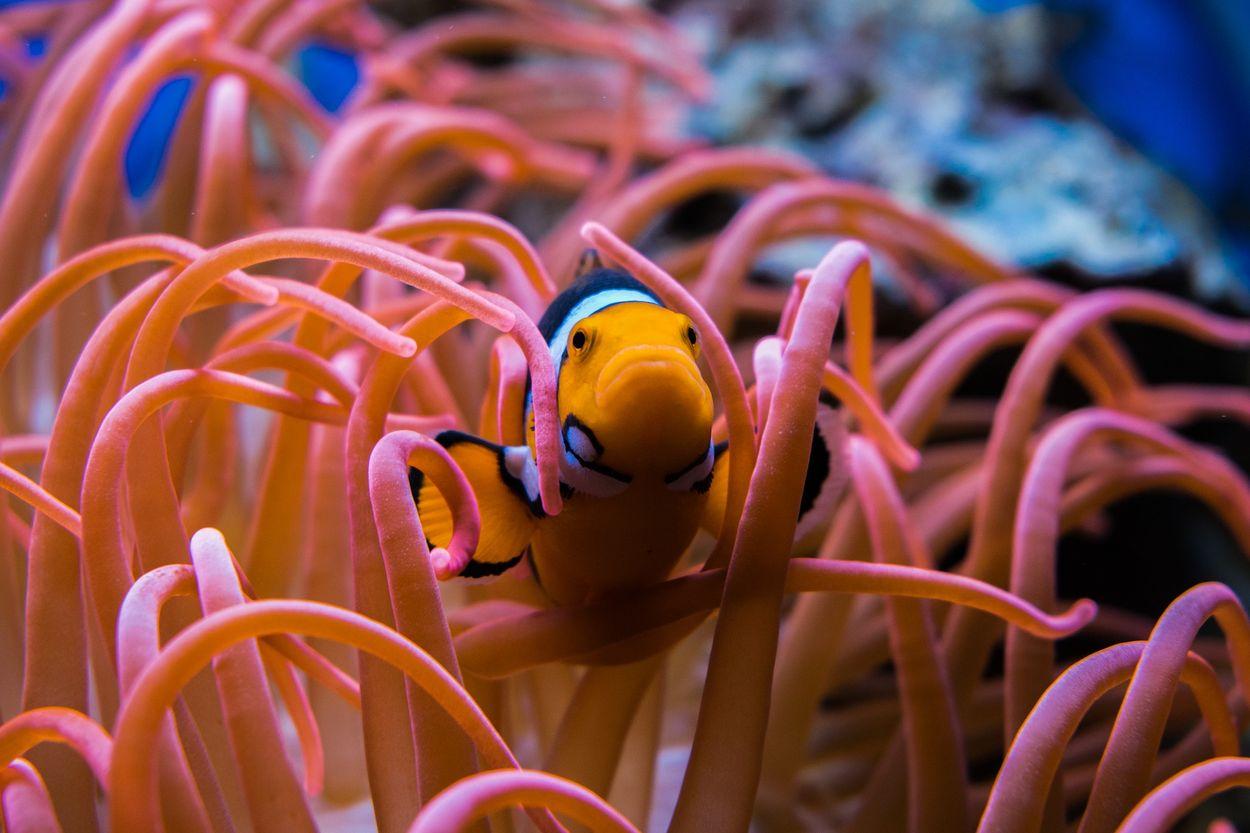clownfish-3030148_1920