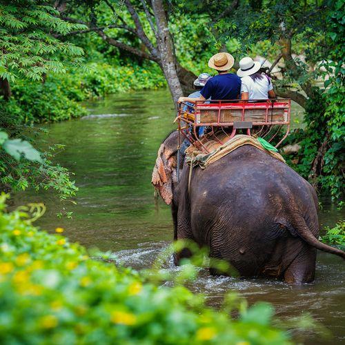 Afbeelding van Wat betekent het coronavirus voor olifanten in de Thaise toerismesector?