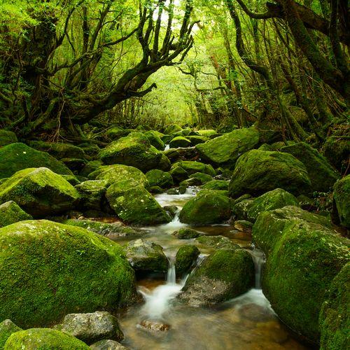 Afbeelding van Dit subtropische Japanse eiland is één groot sprookjesland