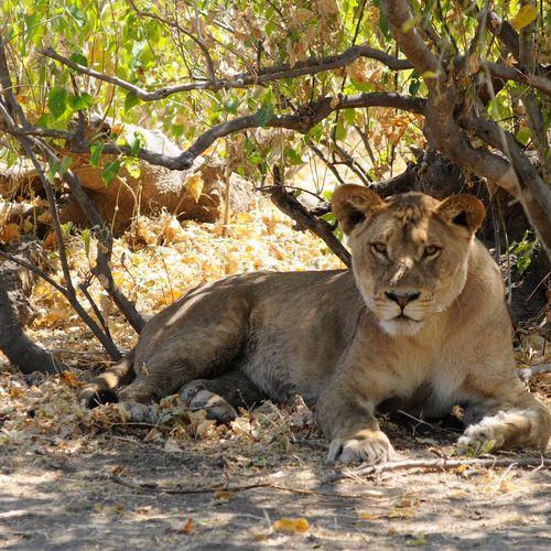 Afbeelding van Kalahari