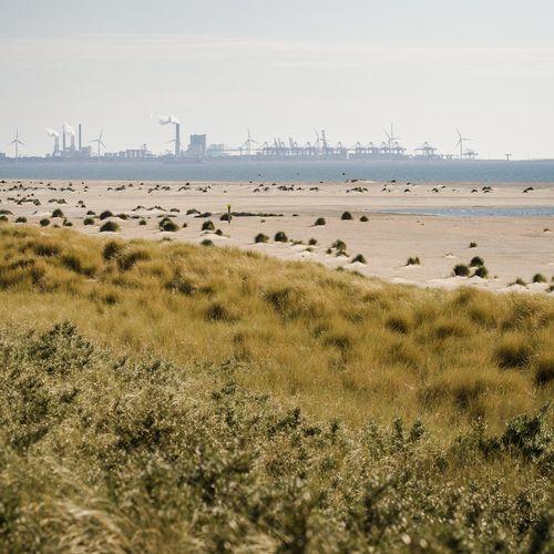 Afbeelding van Weekendtip: uitwaaien op het experimentele strand van Den Haag
