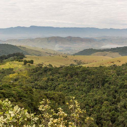 Afbeelding van Atlantisch Regenwoud