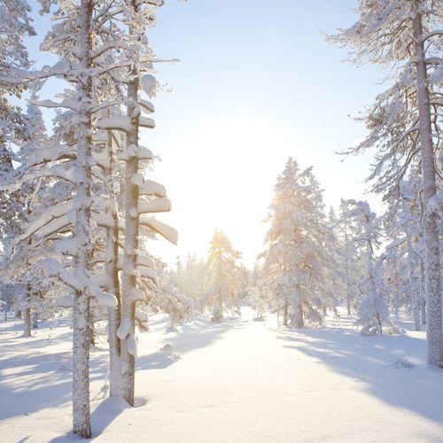 Afbeelding van Noord-Finland