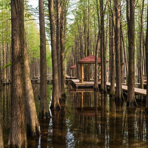 Afbeelding van Dit mysterieuze bos staat volledig onder water