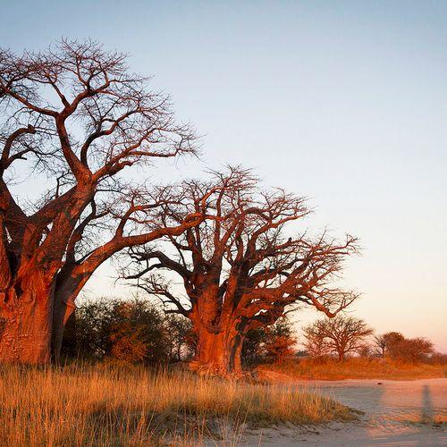 Afbeelding van Nxai Pan National Park